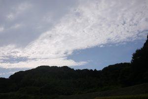 田んぼの景色