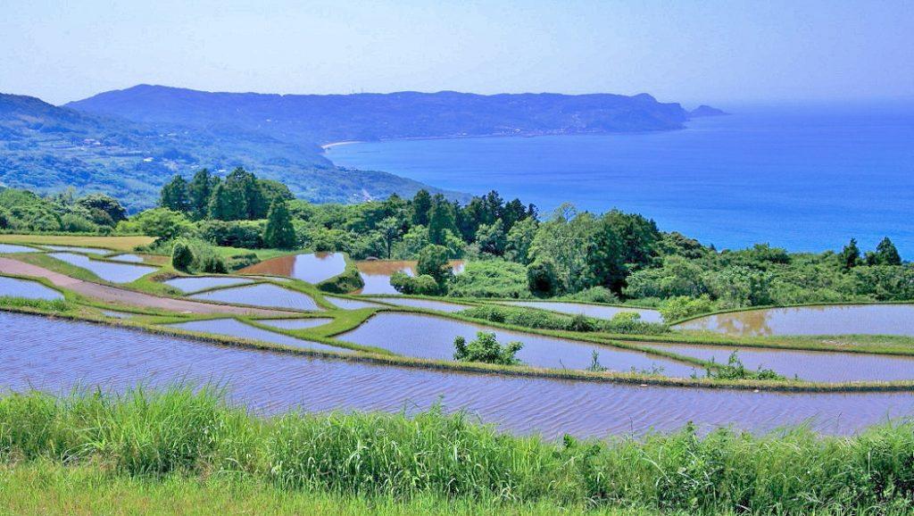 生きているお米の育つ場所