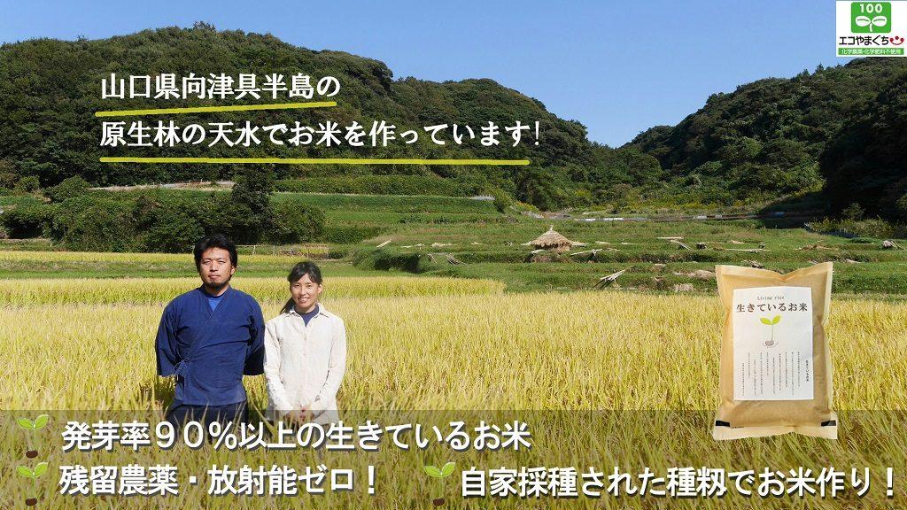 生きているお米 とお宿の くら里木