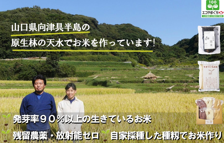 生きているお米 のくら里木です